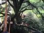 CORSO DI TREE CLIMBING - Operatori addetti ai sistemi di accesso e posizionamento mediante funi per lavori su alberi f3t-abilitazione-lavori-in-quota-102.jpg