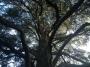 CORSO DI TREE CLIMBING - Operatori addetti ai sistemi di accesso e posizionamento mediante funi per lavori su alberi f3t-abilitazione-lavori-in-quota-103.jpg