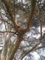 CORSO DI TREE CLIMBING - Operatori addetti ai sistemi di accesso e posizionamento mediante funi per lavori su alberi f3t-abilitazione-lavori-in-quota-104.jpg