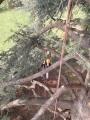 CORSO DI TREE CLIMBING - Operatori addetti ai sistemi di accesso e posizionamento mediante funi per lavori su alberi f3t-abilitazione-lavori-in-quota-105.jpg