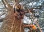 CORSO DI TREE CLIMBING - Operatori addetti ai sistemi di accesso e posizionamento mediante funi per lavori su alberi f3t-abilitazione-lavori-in-quota-110.jpg