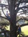 CORSO DI TREE CLIMBING - Operatori addetti ai sistemi di accesso e posizionamento mediante funi per lavori su alberi f3t-abilitazione-lavori-in-quota-111.jpg