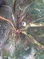 CORSO DI TREE CLIMBING - Operatori addetti ai sistemi di accesso e posizionamento mediante funi per lavori su alberi f3t-abilitazione-lavori-in-quota-112.jpg