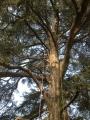 CORSO DI TREE CLIMBING - Operatori addetti ai sistemi di accesso e posizionamento mediante funi per lavori su alberi f3t-abilitazione-lavori-in-quota-113.jpg