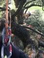 CORSO DI TREE CLIMBING - Operatori addetti ai sistemi di accesso e posizionamento mediante funi per lavori su alberi f3t-abilitazione-lavori-in-quota-117.jpg