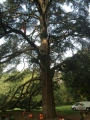 CORSO DI TREE CLIMBING - Operatori addetti ai sistemi di accesso e posizionamento mediante funi per lavori su alberi f3t-abilitazione-lavori-in-quota-118.jpg