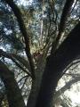CORSO DI TREE CLIMBING - Operatori addetti ai sistemi di accesso e posizionamento mediante funi per lavori su alberi f3t-abilitazione-lavori-in-quota-119.jpg