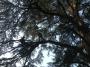 CORSO DI TREE CLIMBING - Operatori addetti ai sistemi di accesso e posizionamento mediante funi per lavori su alberi f3t-abilitazione-lavori-in-quota-120.jpg