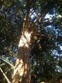 CORSO DI TREE CLIMBING - Operatori addetti ai sistemi di accesso e posizionamento mediante funi per lavori su alberi f3t-abilitazione-lavori-in-quota-122.jpg