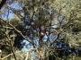 CORSO DI TREE CLIMBING - Operatori addetti ai sistemi di accesso e posizionamento mediante funi per lavori su alberi f3t-abilitazione-lavori-in-quota-123.jpg