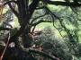 CORSO DI TREE CLIMBING - Operatori addetti ai sistemi di accesso e posizionamento mediante funi per lavori su alberi f3t-abilitazione-lavori-in-quota-124.jpg