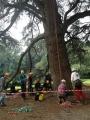 CORSO DI TREE CLIMBING - Operatori addetti ai sistemi di accesso e posizionamento mediante funi per lavori su alberi f3t-abilitazione-lavori-in-quota-125.jpg