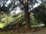 CORSO DI TREE CLIMBING - Operatori addetti ai sistemi di accesso e posizionamento mediante funi per lavori su alberi f3t-abilitazione-lavori-in-quota-129.jpg