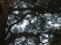 CORSO DI TREE CLIMBING - Operatori addetti ai sistemi di accesso e posizionamento mediante funi per lavori su alberi f3t-abilitazione-lavori-in-quota-130.jpg