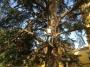 CORSO DI TREE CLIMBING - Operatori addetti ai sistemi di accesso e posizionamento mediante funi per lavori su alberi f3t-abilitazione-lavori-in-quota-131.jpg