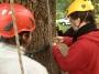 CORSO DI TREE CLIMBING - Operatori addetti ai sistemi di accesso e posizionamento mediante funi per lavori su alberi f3t-abilitazione-lavori-in-quota-133.jpg