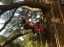 CORSO DI TREE CLIMBING - Operatori addetti ai sistemi di accesso e posizionamento mediante funi per lavori su alberi f3t-abilitazione-lavori-in-quota-135.jpg