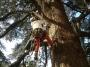 CORSO DI TREE CLIMBING - Operatori addetti ai sistemi di accesso e posizionamento mediante funi per lavori su alberi f3t-abilitazione-lavori-in-quota-141.jpg