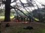 CORSO DI TREE CLIMBING - Operatori addetti ai sistemi di accesso e posizionamento mediante funi per lavori su alberi f3t-abilitazione-lavori-in-quota-143.jpg