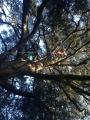 CORSO DI TREE CLIMBING - Operatori addetti ai sistemi di accesso e posizionamento mediante funi per lavori su alberi f3t-abilitazione-lavori-in-quota-144.jpg