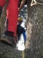 CORSO DI TREE CLIMBING - Operatori addetti ai sistemi di accesso e posizionamento mediante funi per lavori su alberi f3t-abilitazione-lavori-in-quota-145.jpg