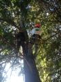 CORSO DI TREE CLIMBING - Operatori addetti ai sistemi di accesso e posizionamento mediante funi per lavori su alberi f3t-abilitazione-lavori-in-quota-146.jpg