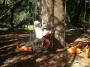 CORSO DI TREE CLIMBING - Operatori addetti ai sistemi di accesso e posizionamento mediante funi per lavori su alberi f3t-abilitazione-lavori-in-quota-147.jpg