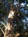 CORSO DI TREE CLIMBING - Operatori addetti ai sistemi di accesso e posizionamento mediante funi per lavori su alberi f3t-abilitazione-lavori-in-quota-148.jpg