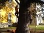 CORSO DI TREE CLIMBING - Operatori addetti ai sistemi di accesso e posizionamento mediante funi per lavori su alberi f3t-abilitazione-lavori-in-quota-153.jpg