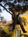 CORSO DI TREE CLIMBING - Operatori addetti ai sistemi di accesso e posizionamento mediante funi per lavori su alberi f3t-abilitazione-lavori-in-quota-155.jpg