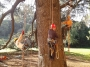 CORSO DI TREE CLIMBING - Operatori addetti ai sistemi di accesso e posizionamento mediante funi per lavori su alberi f3t-abilitazione-lavori-in-quota-157.jpg
