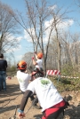 Biomeccanica del cedimento degli alberi formazione3t-marzo-2014-(1).jpg