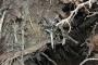 Biomeccanica del cedimento degli alberi formazione3t-marzo-2014-(12).jpg