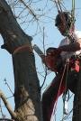 Biomeccanica del cedimento degli alberi formazione3t-marzo-2014-(13).jpg