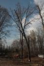 Biomeccanica del cedimento degli alberi formazione3t-marzo-2014-(15).jpg