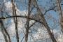 Biomeccanica del cedimento degli alberi formazione3t-marzo-2014-(17).jpg