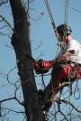 Biomeccanica del cedimento degli alberi formazione3t-marzo-2014-(18).jpg