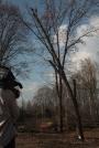 Biomeccanica del cedimento degli alberi formazione3t-marzo-2014-(2).jpg