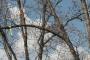 Biomeccanica del cedimento degli alberi formazione3t-marzo-2014-(21).jpg