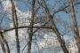 Biomeccanica del cedimento degli alberi formazione3t-marzo-2014-(22).jpg