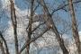 Biomeccanica del cedimento degli alberi formazione3t-marzo-2014-(23).jpg