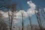 Biomeccanica del cedimento degli alberi formazione3t-marzo-2014-(31).jpg
