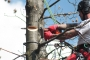 Biomeccanica del cedimento degli alberi formazione3t-marzo-2014-(39).jpg
