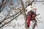 Biomeccanica del cedimento degli alberi formazione3t-marzo-2014-(44).jpg