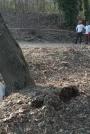 Biomeccanica del cedimento degli alberi formazione3t-marzo-2014-(49).jpg