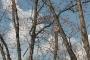 Biomeccanica del cedimento degli alberi formazione3t-marzo-2014-(52).jpg