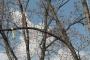 Biomeccanica del cedimento degli alberi formazione3t-marzo-2014-(53).jpg