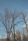 Biomeccanica del cedimento degli alberi formazione3t-marzo-2014-(54).jpg
