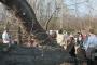 Biomeccanica del cedimento degli alberi formazione3t-marzo-2014-(60).jpg