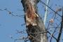 Biomeccanica del cedimento degli alberi formazione3t-marzo-2014-(61).jpg